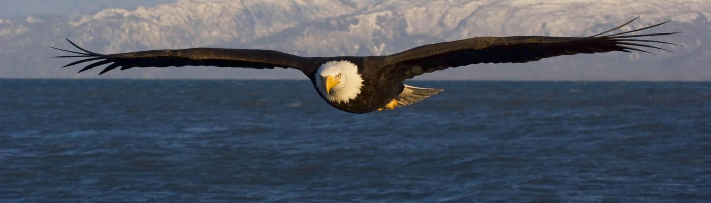 images/banners/flying-american-eagle-hd-wallpapers-desktop.jpg